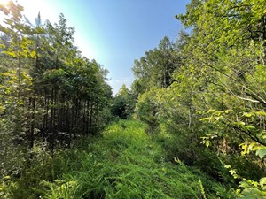 NO RESTRICTIONS WOODED LAND FOR SALE IN HARDIN COUNTY