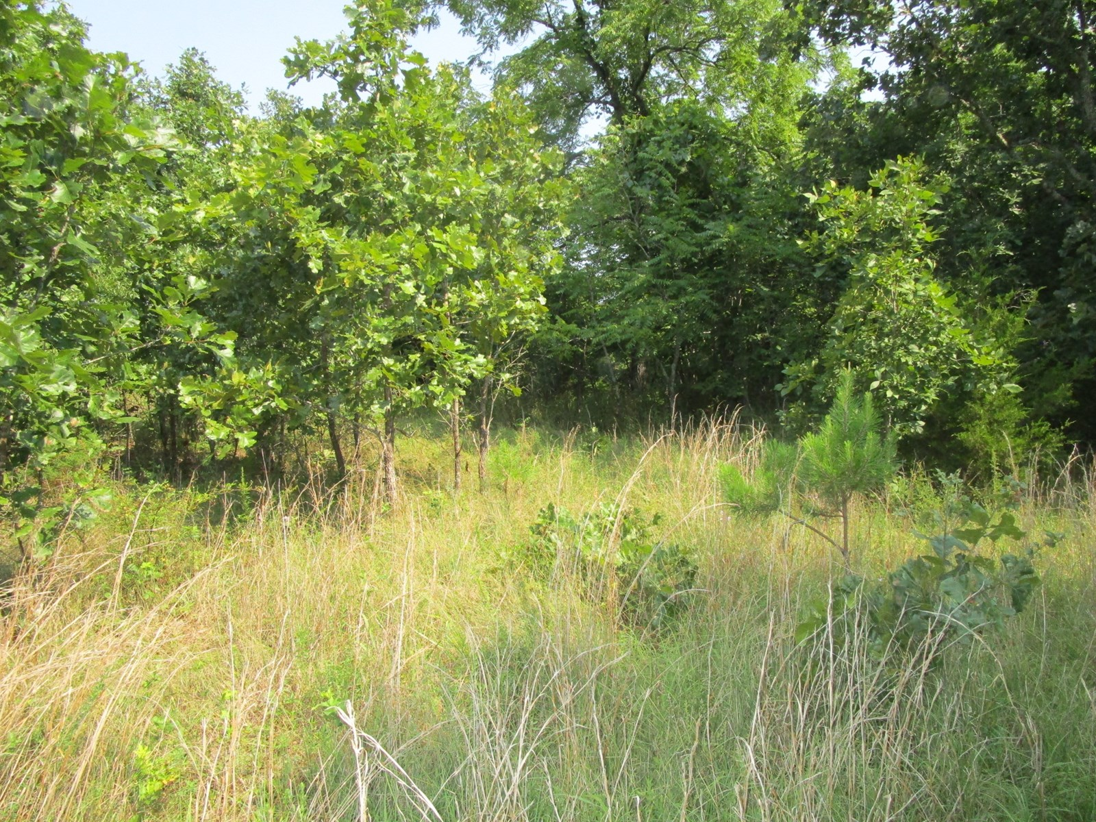 Southern Missouri Land for Sale - Hunting Property in MO