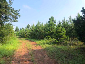 GREAT TIMBERLAND AND RECREATIONAL TRACT CASS COUNTY, TX