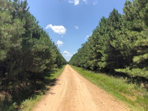 LARGE INVESTMENT PINE TIMBERLAND FOR SALE NEAR SHERIDAN, AR