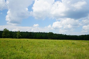 HORSE PROPERTY JOINING NATIONAL FOREST IN OKLAHOMA