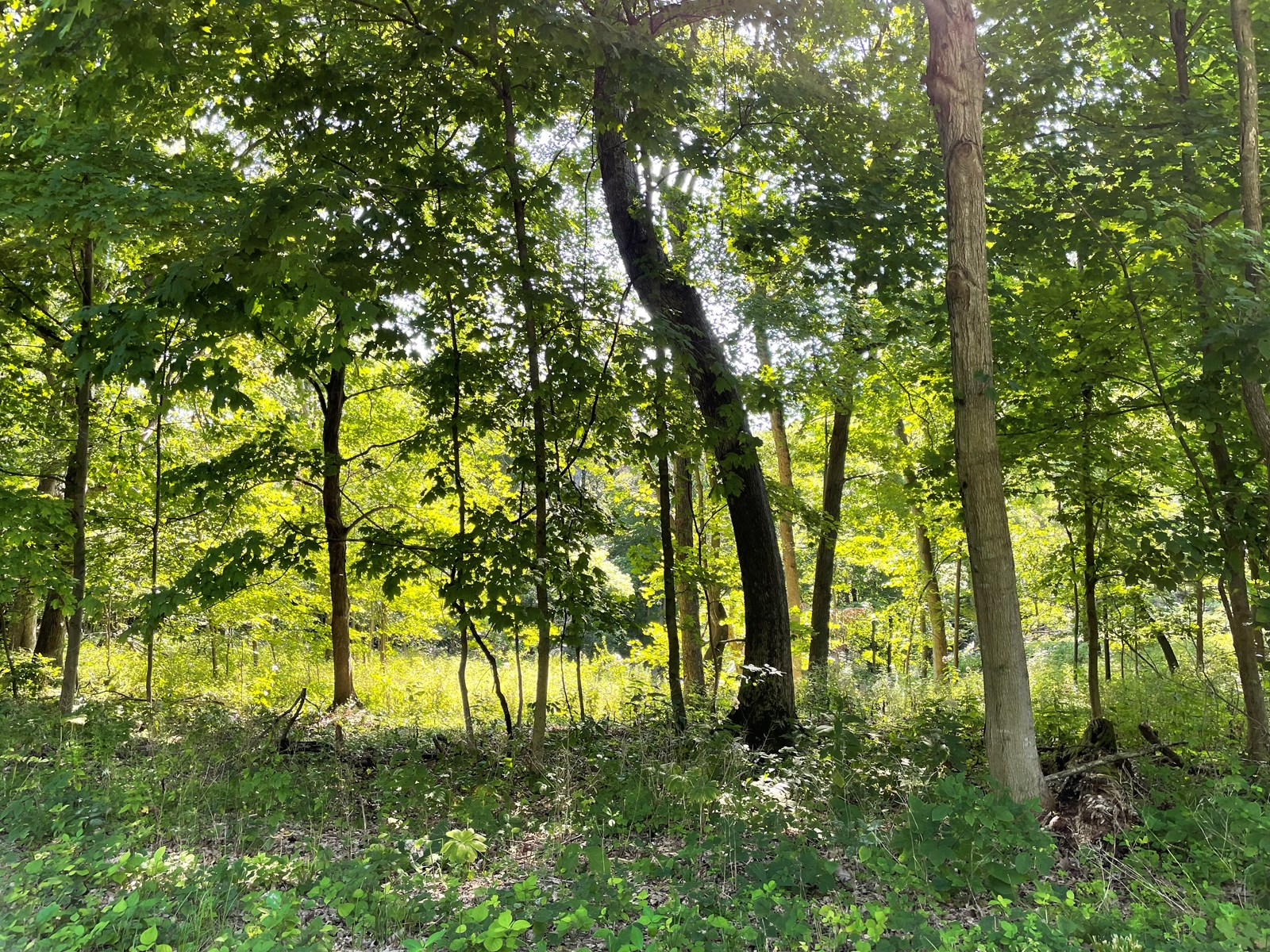 Buildable Lot for sale in Galena