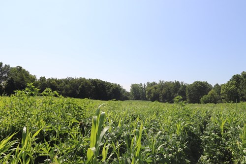 Partially Wooded Lot Mt Gilead Ohio Kokosing River