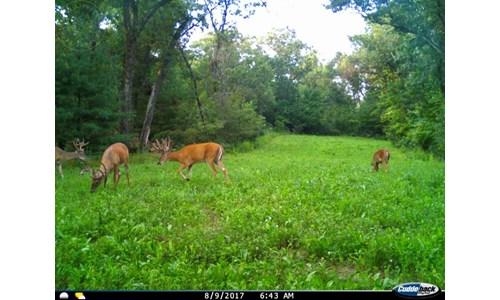 Adams County 262 Acre Multi Parcel Land Auction