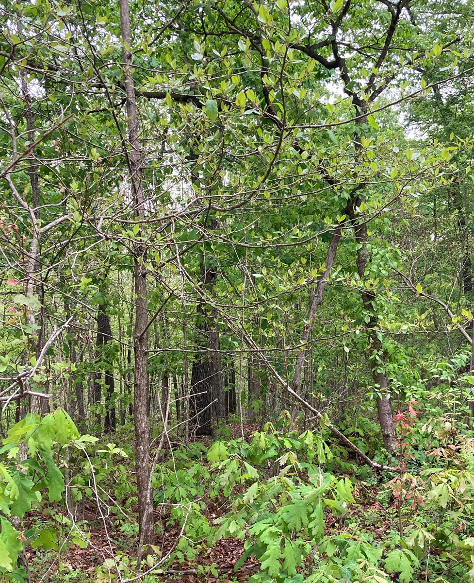 Land for Sale in South Central Missouri