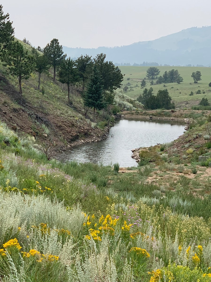 Beautiful 49.99 Acre Lot for Sale In Cotopaxi