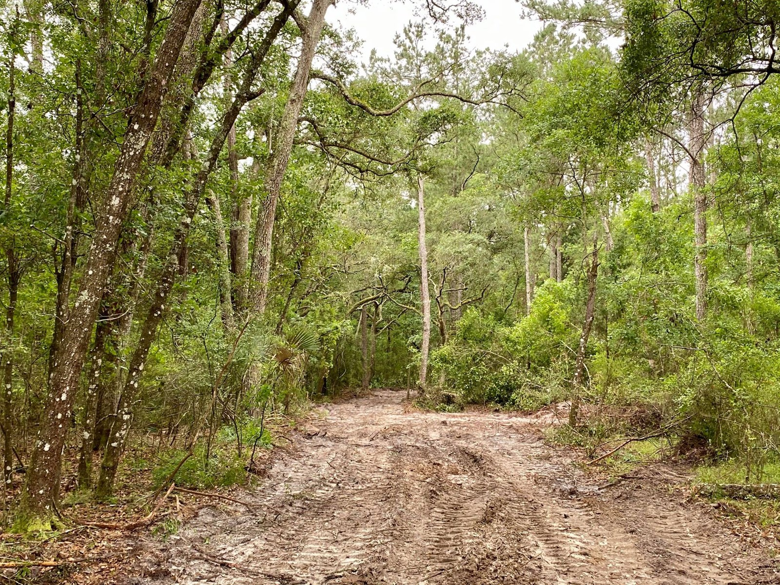 22 ACRES IN BEAUTIFUL BELL FLORIDA!