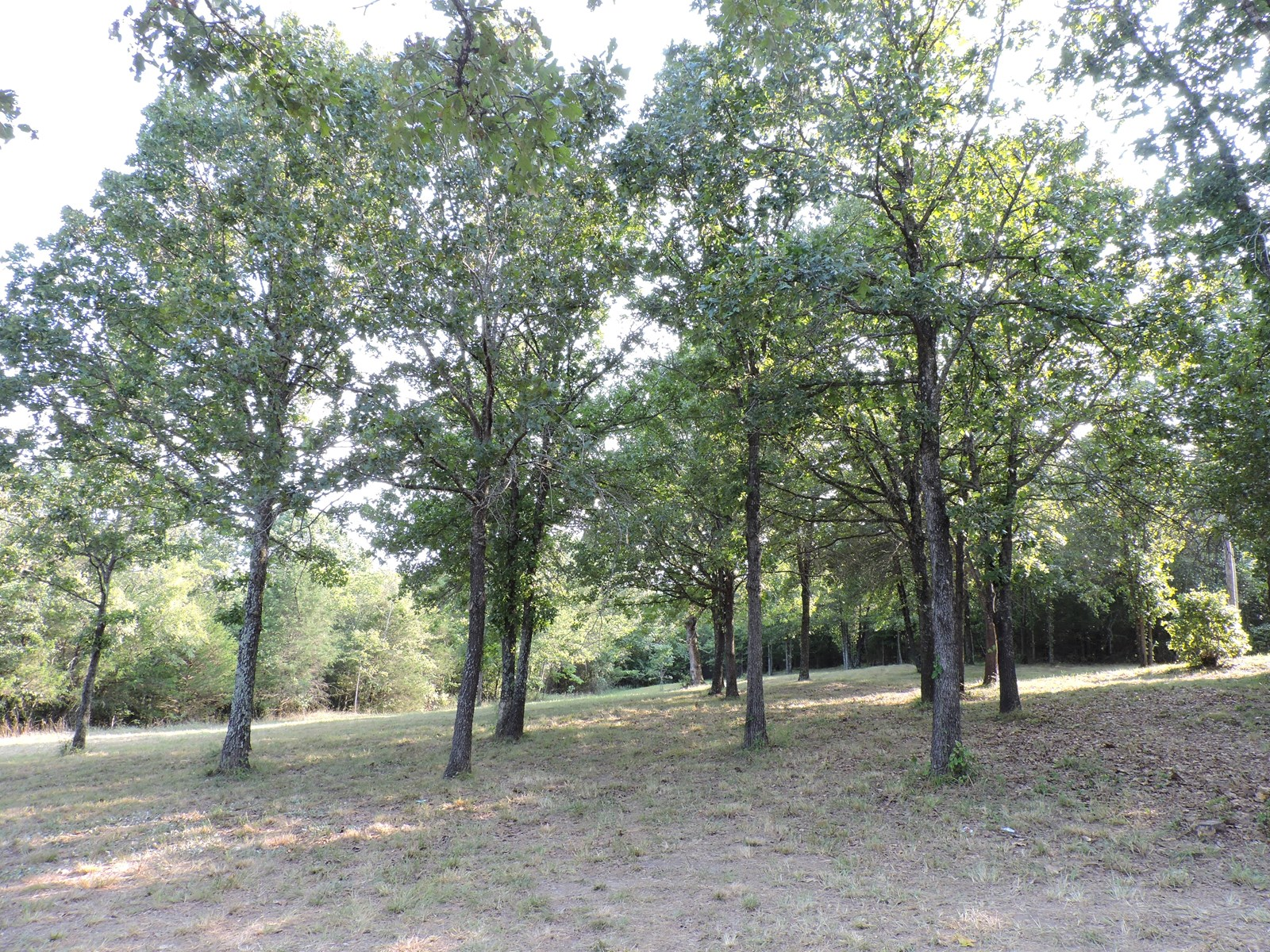 Land For Sale With Dome Home Near Bull Shoals Lake