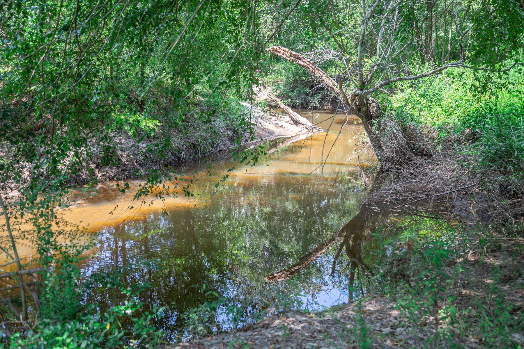 5.1 Acres For Sale On A Creek In Slocomb, AL