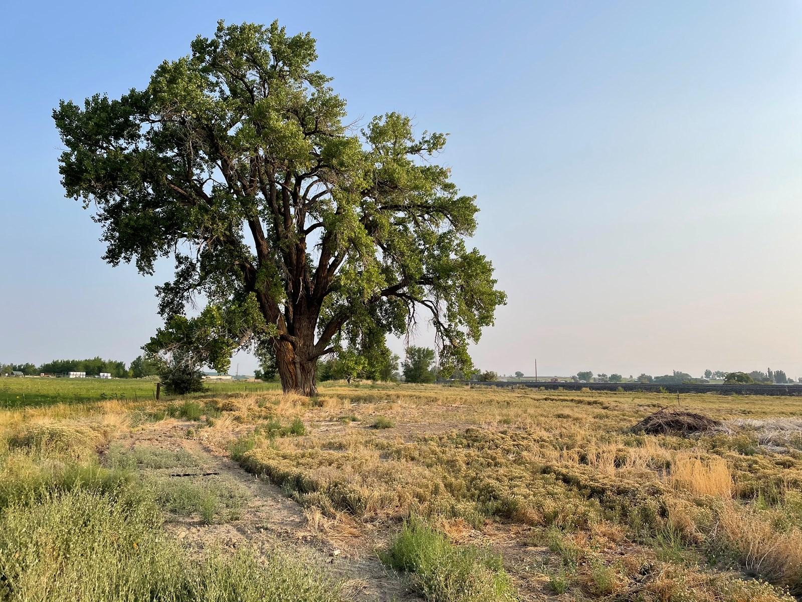 Colorado Farm Land for Sale