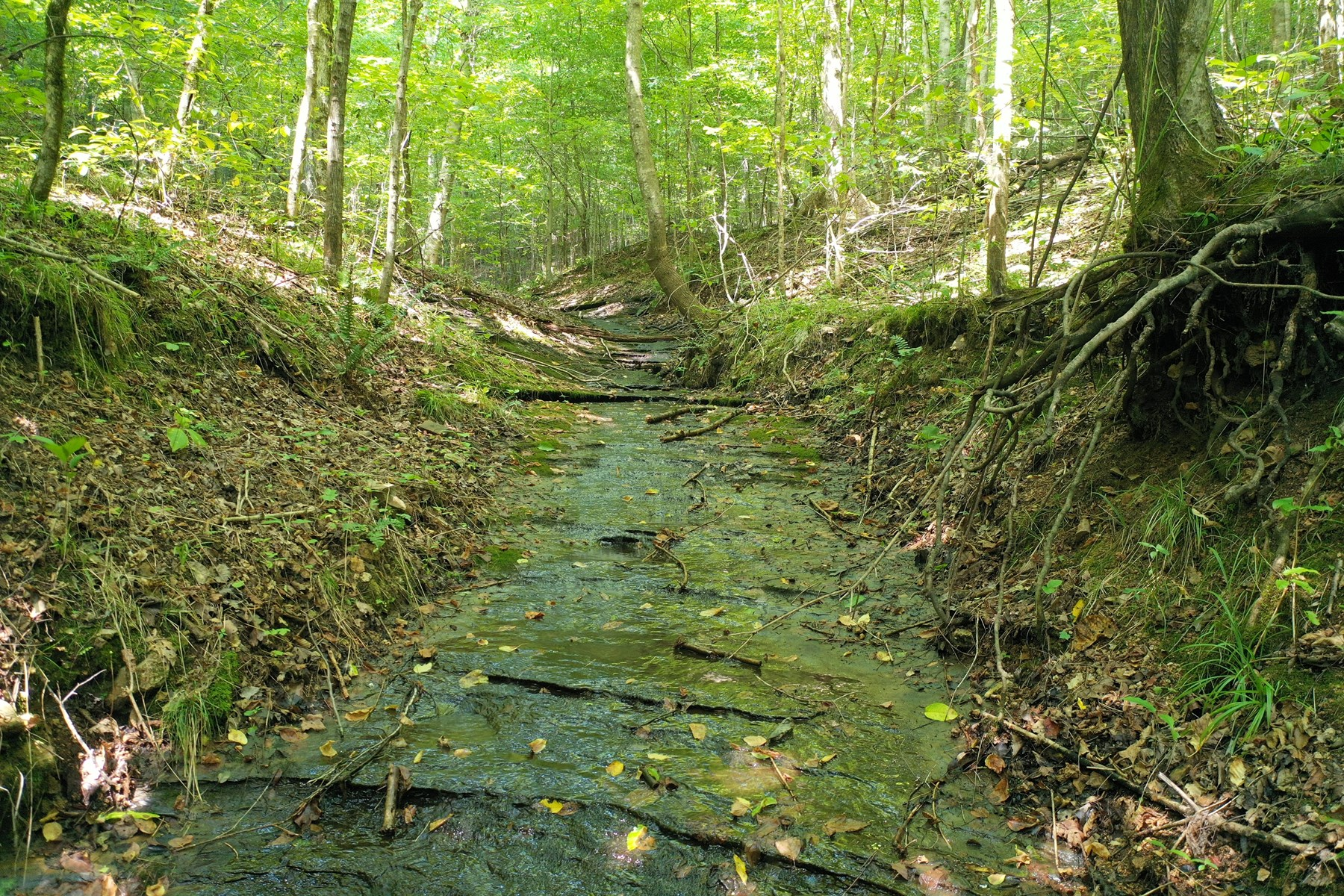 Land in TN with creeks, springs, waterfall, Owner Terms!