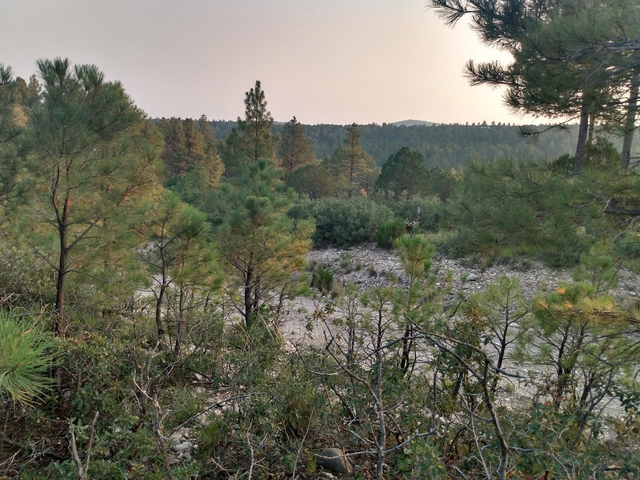 HUNTING LAND IN UNIT 34 NEW MEXICO FOR SALE
