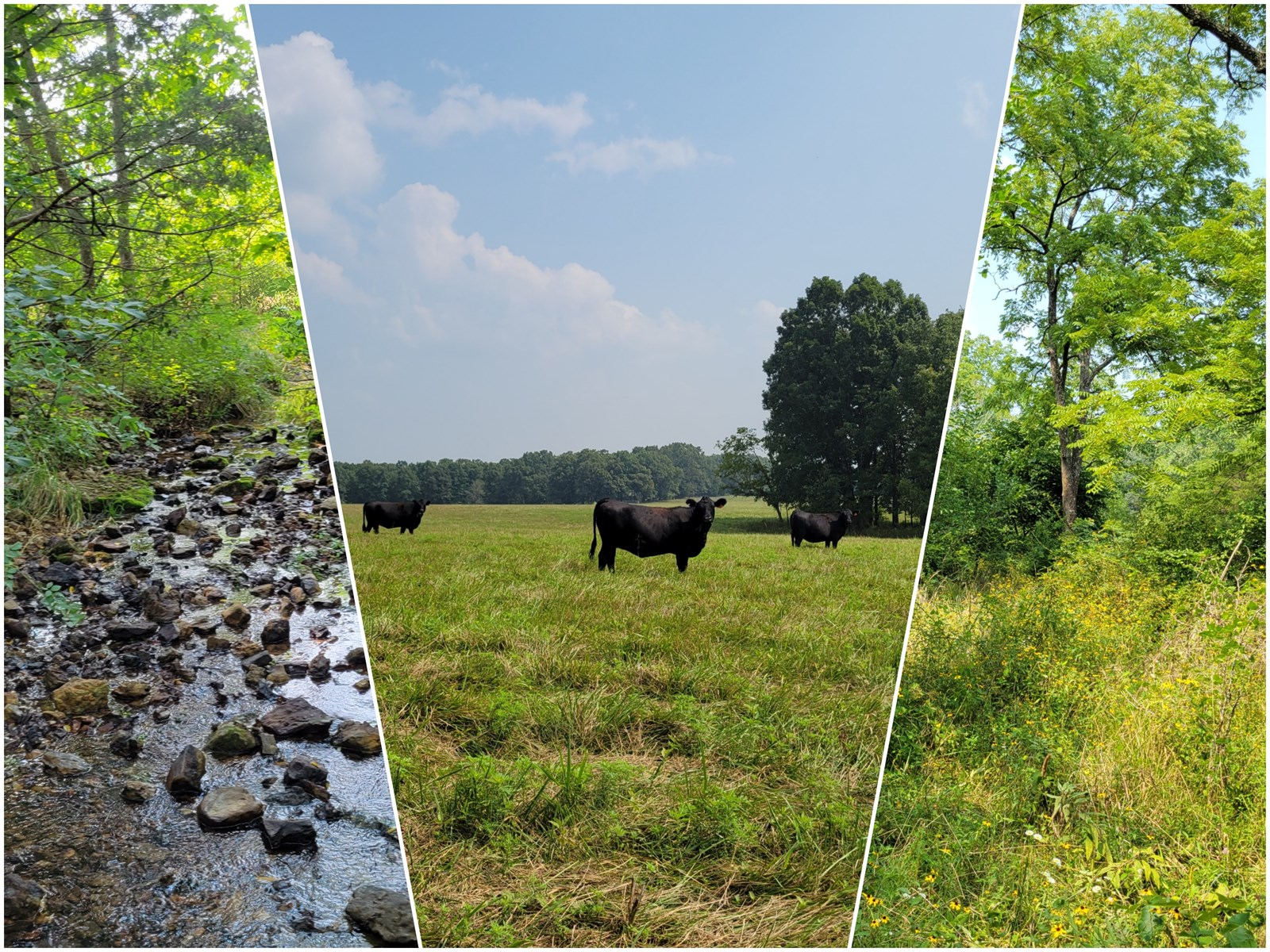 Recreational, Hunting, Farm Land for Sale in Southern MO