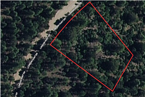 PRIVATE WOOD LOT FOR SALE NEW MEXICO