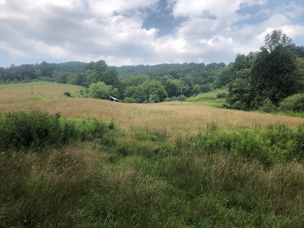 Beautiful Acreage for Sale in Mouth of Wilson VA