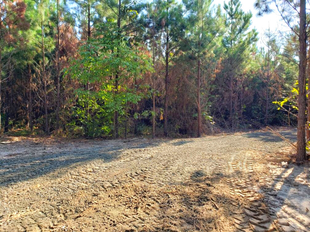 Land for sale in East Texas