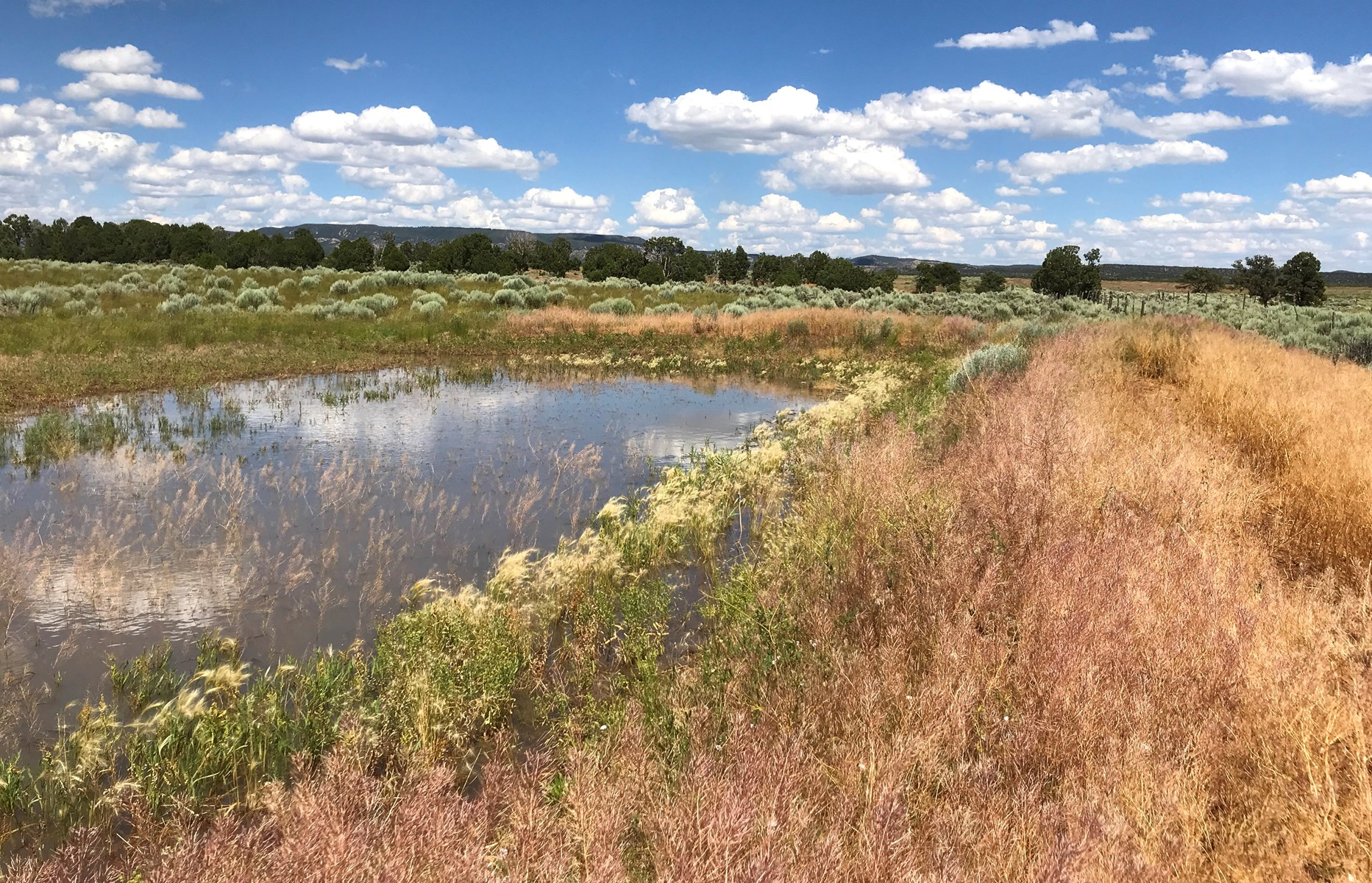 70+ Acres South of Durango, CO For Sale!