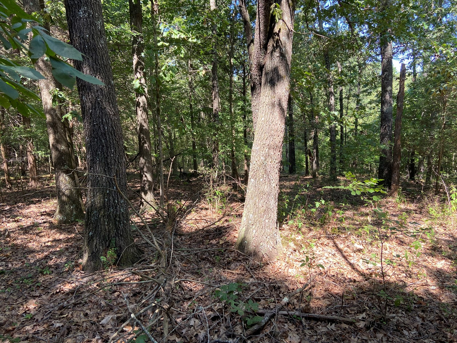Land for sale in town, 10 Lots in middle of Pocahontas, AR