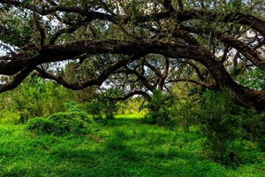 UNRESTRICTED, UNDEVELOPED HUNTING LAND IN ATASCOSA COUNTY