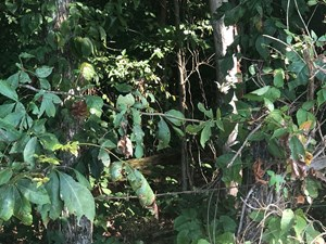 1.57 ACRES UNRESTRICTED LAND IN EAST TN