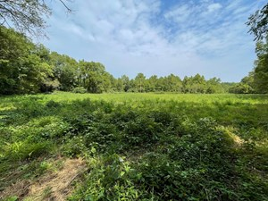 LAND WITH CREEK FOR SALE IN DOUGLAS COUNTY MO