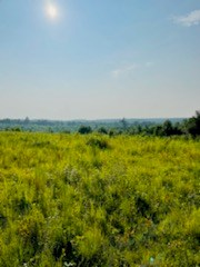 Hunting & Recreational Acreage for Sale in Wayne County, TN