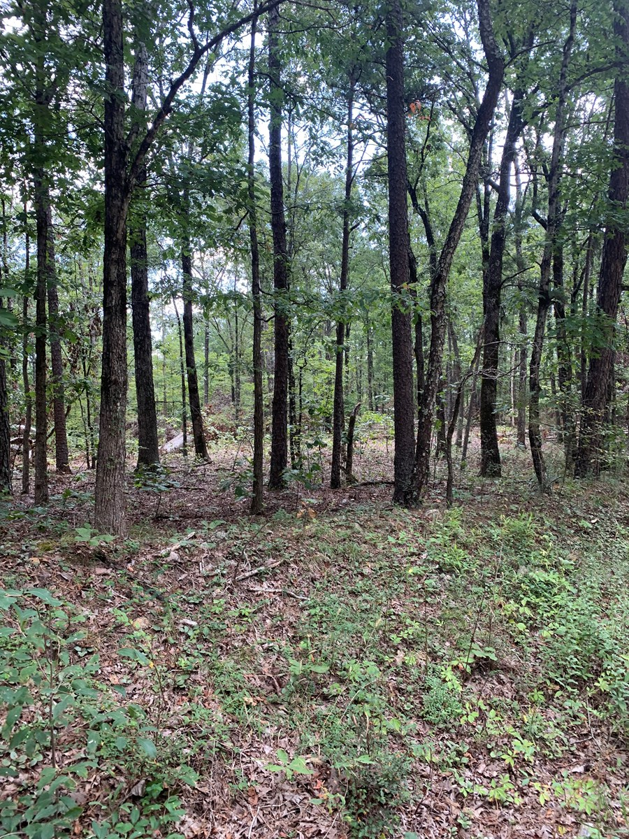 Wayne County Missouri Land For Sale 10 acres