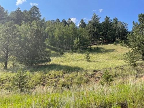Colorado Mountain Property for sale