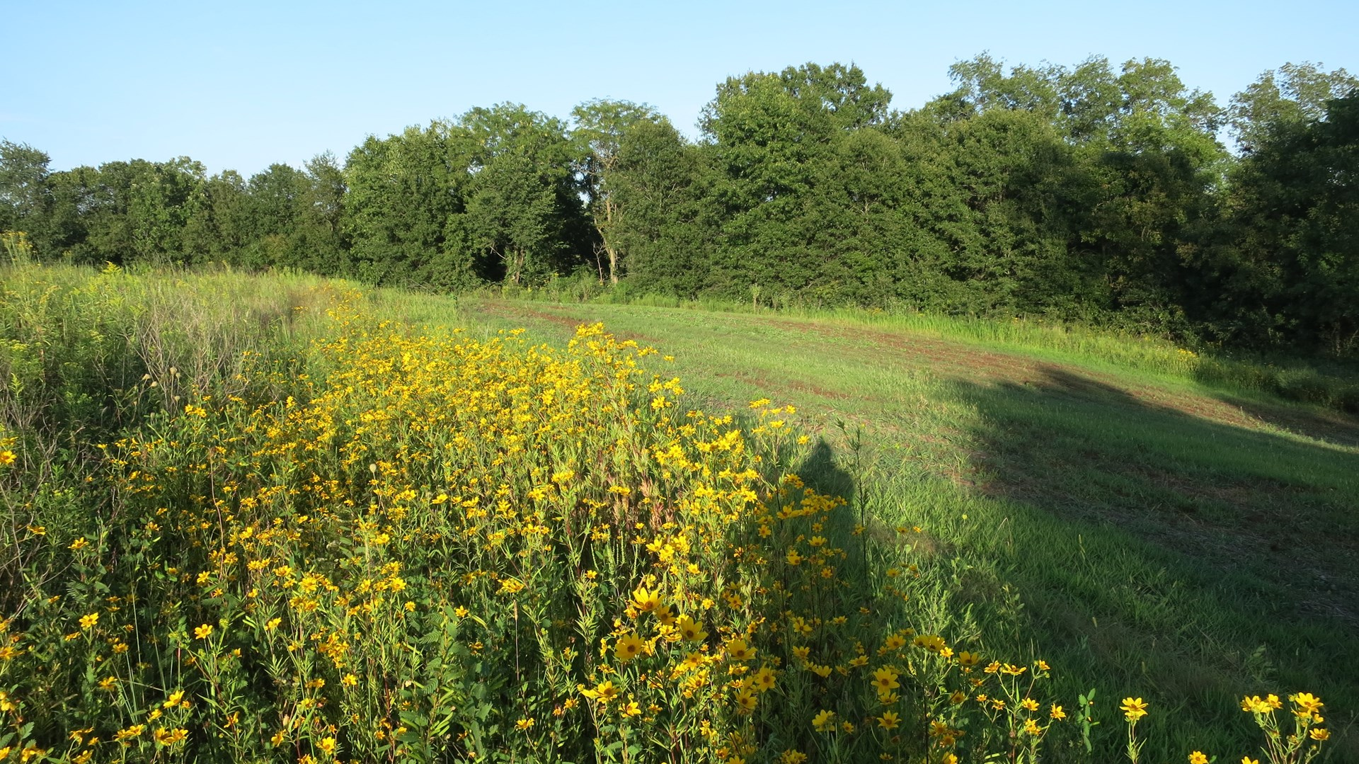 For Sale 90 Acres m/l Hunting Tract