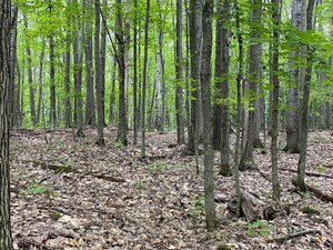 ACREAGE FOR SALE IN PINE COUNTY, MN, WOODED LAND FOR SALE