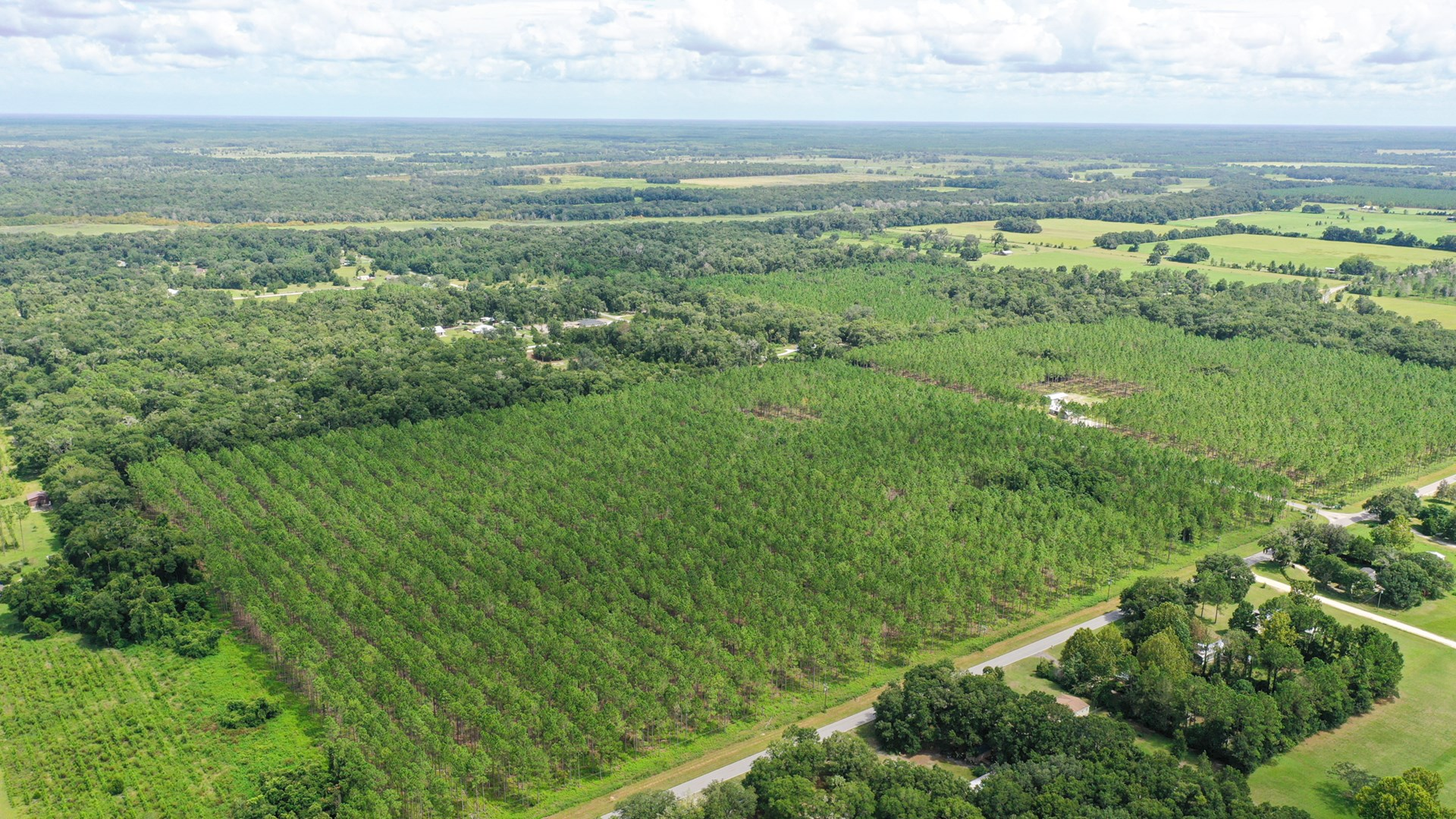 COUNTRY LIVING! PLANTED PINES! CHIEFLAND FLORIDA!