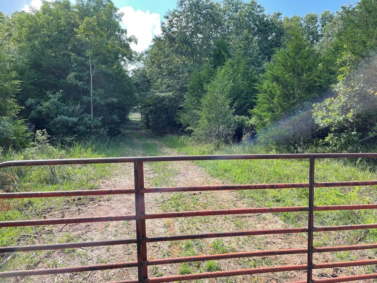 Mostly Wooded Acreage for Sale!