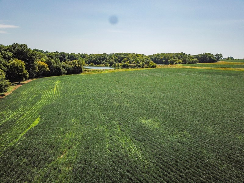 Audrain Tract 2 - 241.6 ac