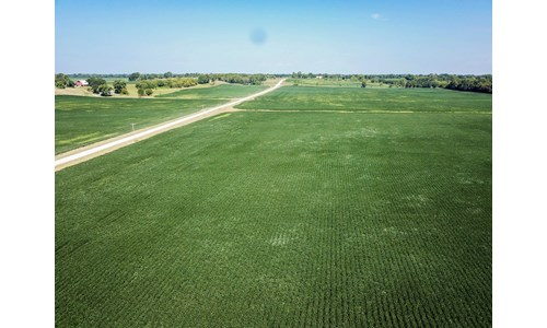 Tract 4 - 84 ac +/- for auction in Audrain County, Missouri