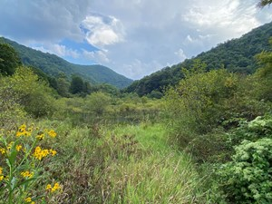 MOUNTAIN ACREAGE WITH VIEWS AND STOCKED TROUT STREAM