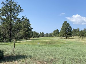 LOT FOR SALE, EASY ACCESS TOWN, LOG HILL, RIDGWAY, COLORADO