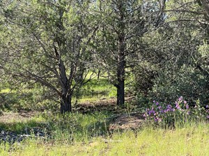 GORGEOUS TREED PROPERTY HAS ELECTRIC & SEPTIC NEAR SELIGMAN