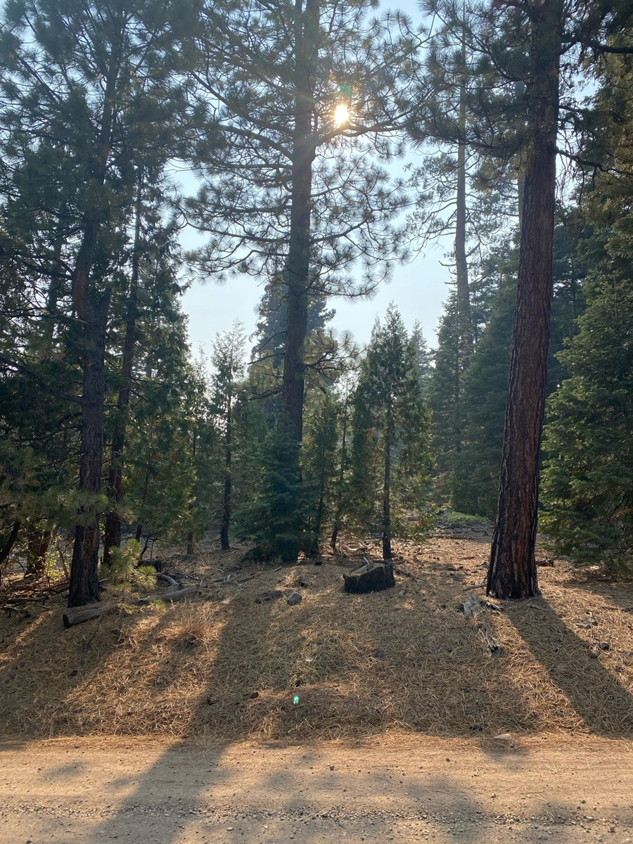Land For Sale In Alturas, CA!