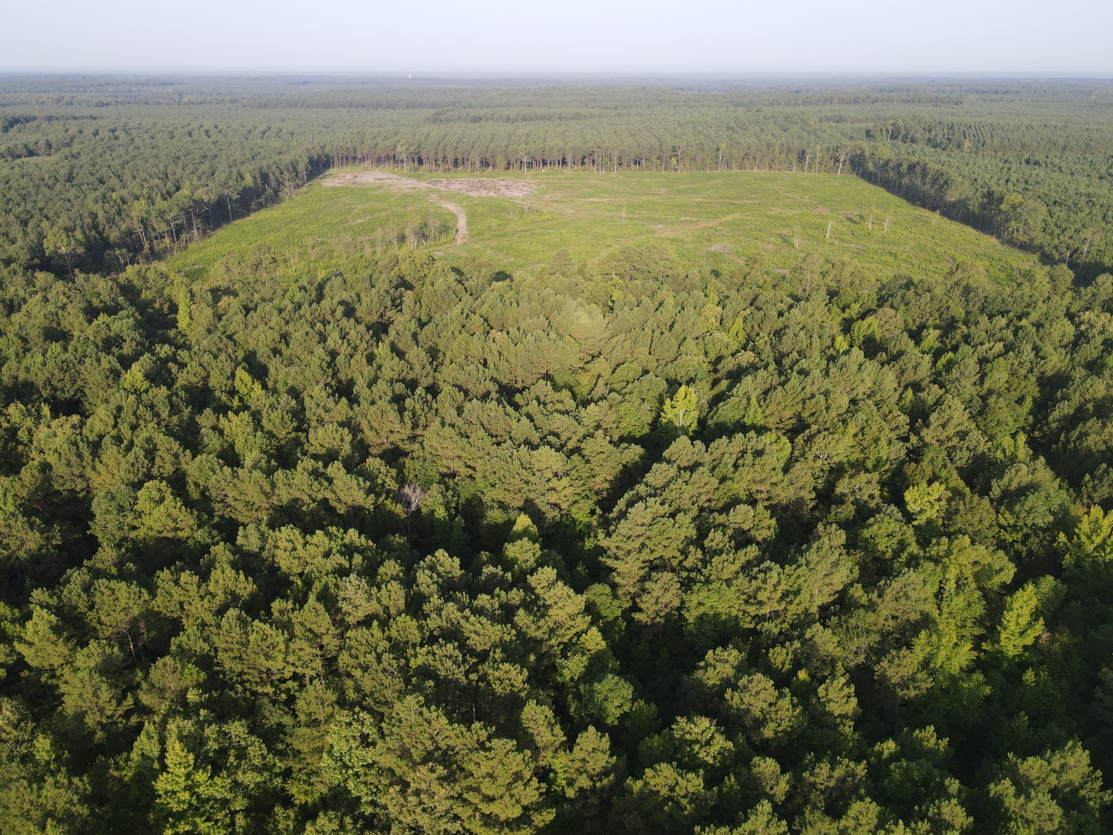 Hunting Land in Grant County Arkansas near Grapevine