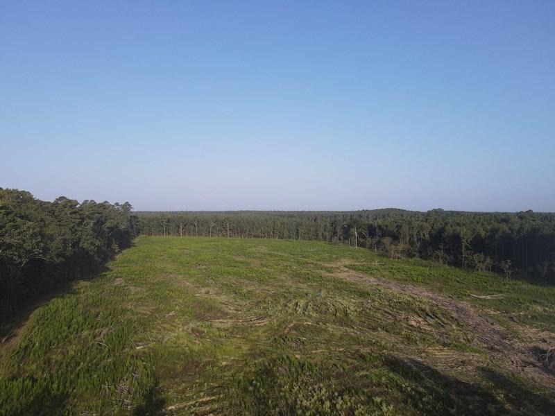 60 acre clear cut