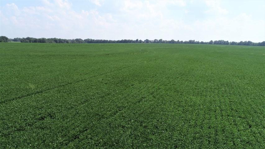 353+/- Ac, Exceptional Upland Row Crop Farm, Johnson County