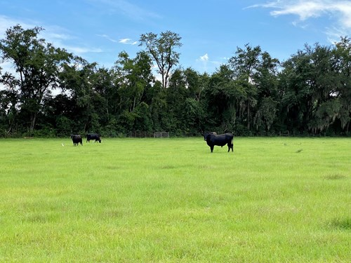 BEAUTIFUL PASTURE LAND IN NORTH CENTRAL FLORIDA!