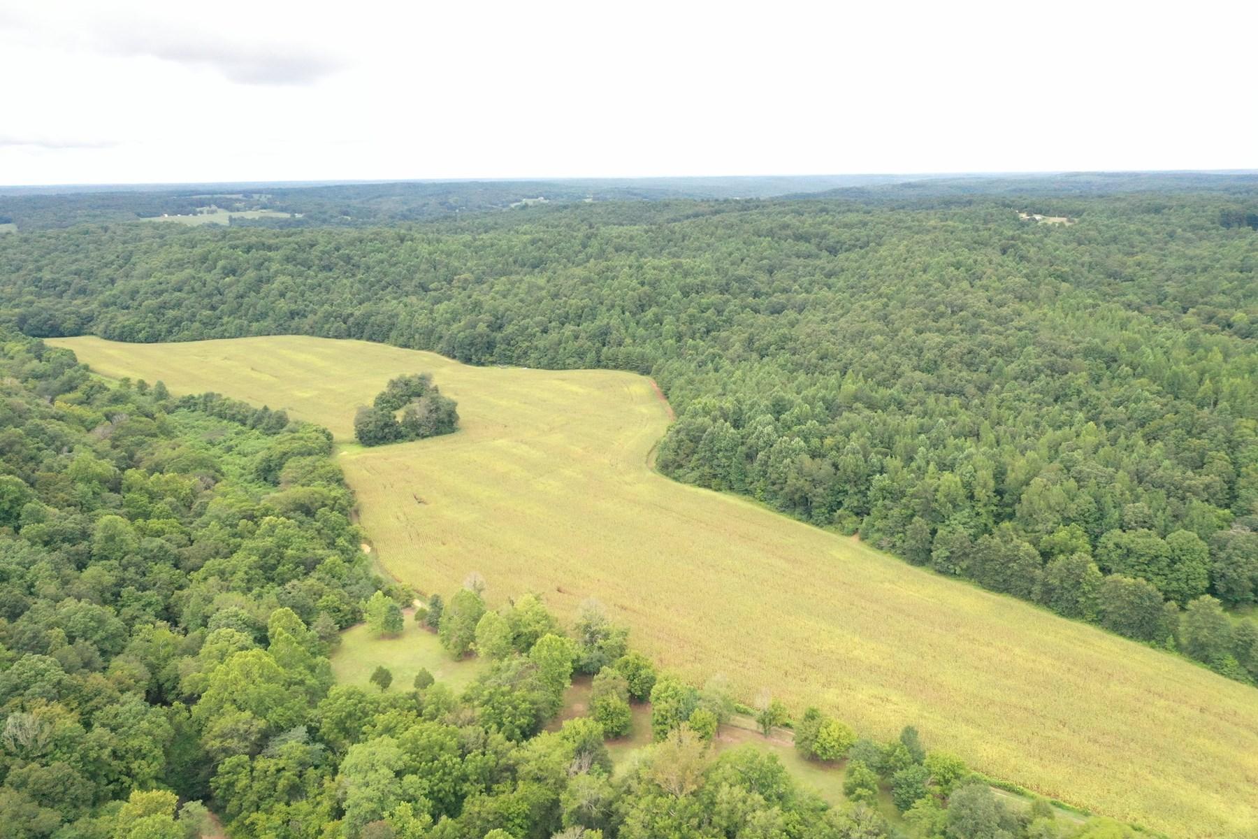 Farm for sale in Iron City TN.
