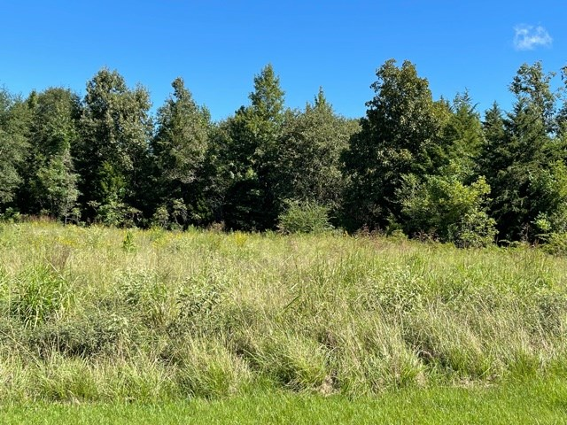 Land With Mixed Timberland For Sale in Naples, TX!