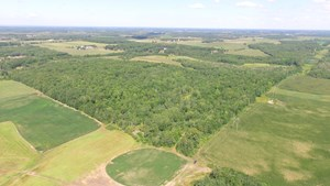 40 ACRE HUNTING PROPERTY IN MORRISON COUNTY, MINNESOTA!