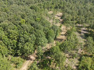 HUNTING AND RECREATIONAL TRACT IN EAST TEXAS