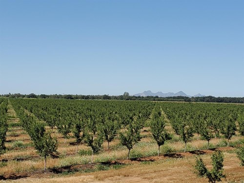 Northern California Orchards & Farms For Sale