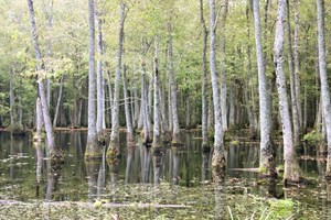 2,053  ACRES HUNTING LAND FOR SALE JASPER COUNTY, MS