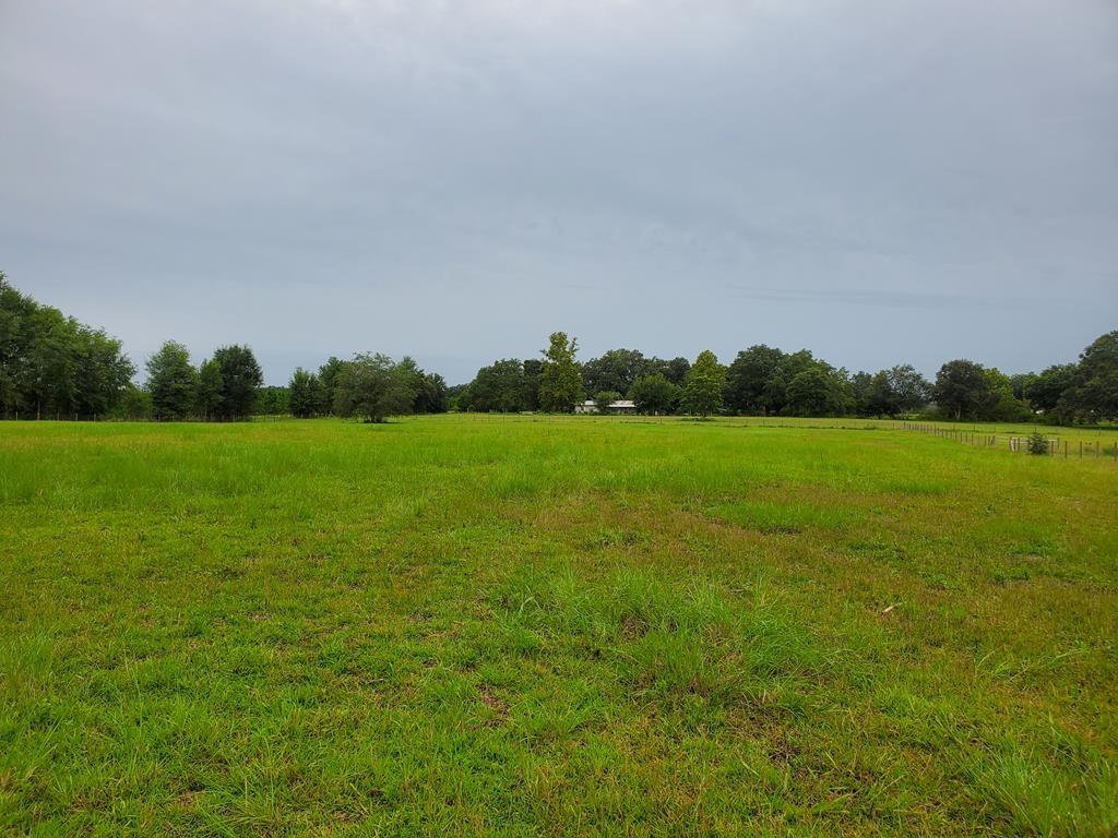 Fenced Pastured land w/scattered trees Trenton, FL Gilchrist