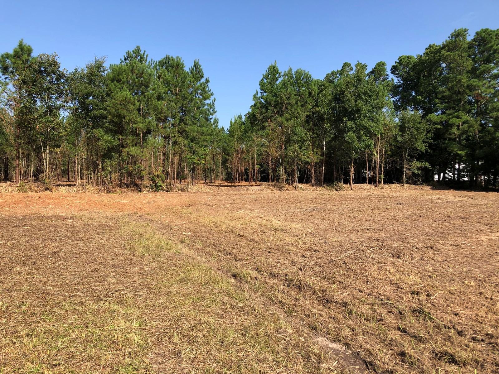 Land For Sale in Belhaven, North Carolina